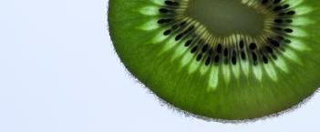 kiwi-1143717_1920