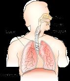 anatomy-117148_1280