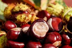 chestnut-1710748_1280